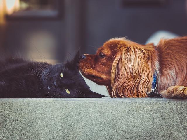 chien et chat en maison de retraite